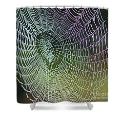 Spider Web Shower Curtain by Heiko Koehrer-Wagner