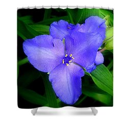 Spiderwort Shower Curtain by Greg Moores