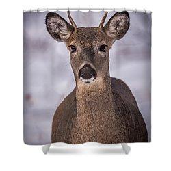 Spike Buck Shower Curtain