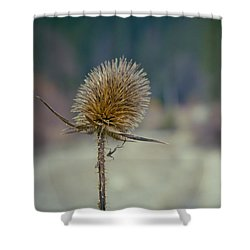 Spiny Weed Close-up Shower Curtain