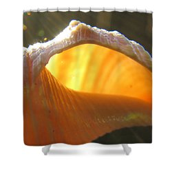 Spiral Light Shower Curtain