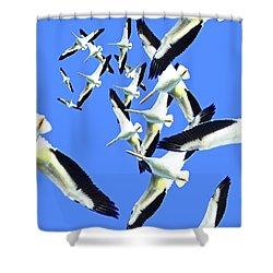 Shower Curtain featuring the photograph Spiral  by Lizi Beard-Ward