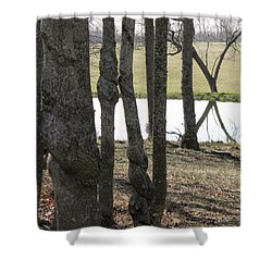 Shower Curtain featuring the photograph Spiral Trees by Nick Kirby
