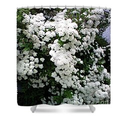 Shower Curtain featuring the photograph Spirea Bridal Veil by Barbara Griffin
