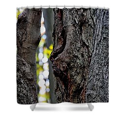 Spirit Of The Forest Shower Curtain by Andrea Kollo