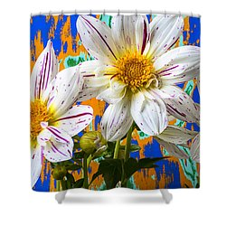 Splash Of Color Shower Curtain by Garry Gay