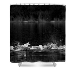 Shower Curtain featuring the photograph Splashing Seagulls by Yulia Kazansky