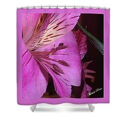 Splendid Beauty Shower Curtain
