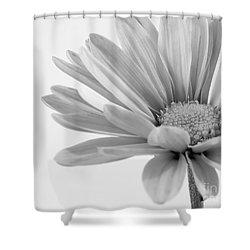 Splendid Daisy Shower Curtain
