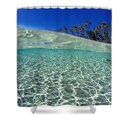 Split Level Palms Shower Curtain by Sean Davey