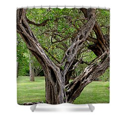 Shower Curtain featuring the photograph Spooky Tree by Rosalie Scanlon