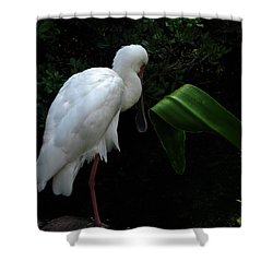 Spoonbill Morning Shower Curtain