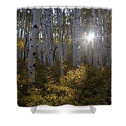 Spot Of Sun Shower Curtain by Jeffrey Kolker