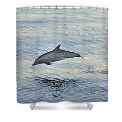 Shower Curtain featuring the photograph Spotted Dolphin Leaping by Bradford Martin