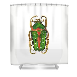 Spotted Flour Beetle Shower Curtain by Cindy Hitchcock