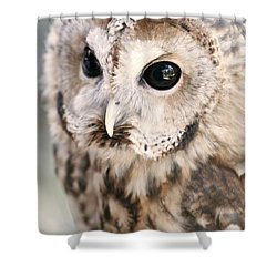 Shower Curtain featuring the photograph Spotted Owl by Shoal Hollingsworth
