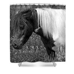 Spotted Pony Shower Curtain by Joyce  Wasser