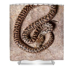 Spotted Python Antaresia Maculosa Top Shower Curtain