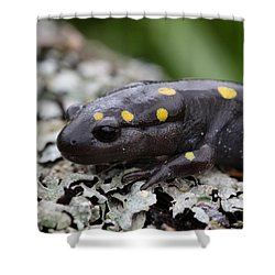 Spotted Salamander Shower Curtain by Bruce J Robinson