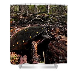 Spotted Turtle Shower Curtain
