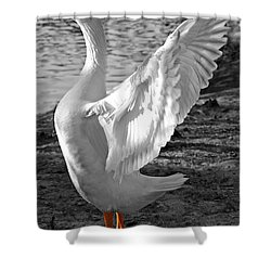 Spread Your Wings B And W Shower Curtain