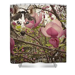 Spring And Beauty Shower Curtain