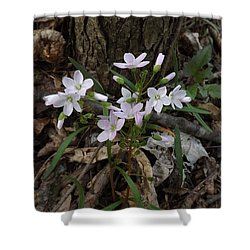 Spring Beauty Shower Curtain by Sara  Raber