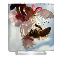 Shower Curtain featuring the photograph Spring Bee by Kathy Bassett
