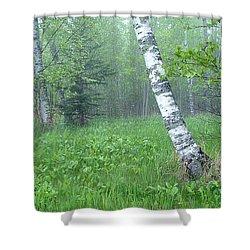 Spring Birch Shower Curtain by Bill Morgenstern