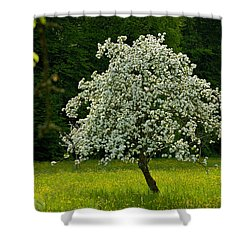 Spring - Blooming Apple Tree And Green Meadow Shower Curtain