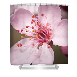 Spring Blooms 6697 Shower Curtain by Timothy Bischoff