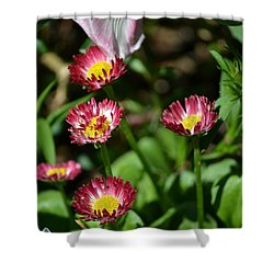 Shower Curtain featuring the photograph Spring Blooms by Tara Potts