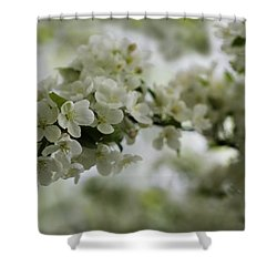 Shower Curtain featuring the photograph Spring Bloosom by Sebastian Musial