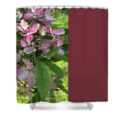 Spring Blossoms - Flower Photography Shower Curtain
