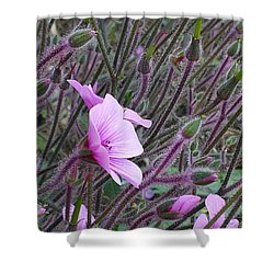 Shower Curtain featuring the photograph Spring Buds by Jasna Gopic