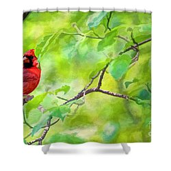 Spring Cardinal Shower Curtain by Darren Fisher