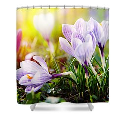 Shower Curtain featuring the photograph Spring by Christine Sponchia