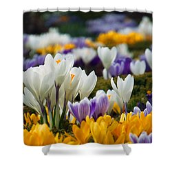 Shower Curtain featuring the photograph Spring Crocus by Dianne Cowen