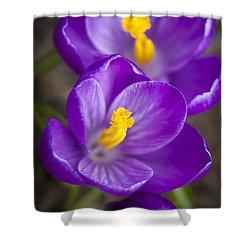 Spring Crocus Shower Curtain by Adam Romanowicz