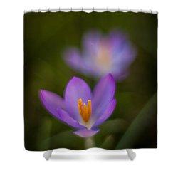 Spring Crocus Glow Shower Curtain by Mike Reid