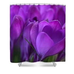 Spring Crocuses Shower Curtain by Peggy Collins
