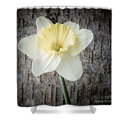Spring Daffodil Square Shower Curtain by Edward Fielding