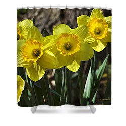 Spring Daffodils Shower Curtain by Christina Rollo