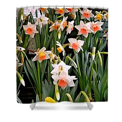 Shower Curtain featuring the photograph Spring Daffodils by Ira Shander