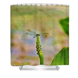 Spring Damsel Shower Curtain by Deborah Benoit