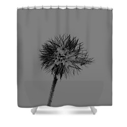 Spring Dandelion Shower Curtain by Tommytechno Sweden