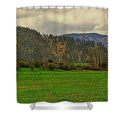Spring Dandylions Shower Curtain by Sam Rosen