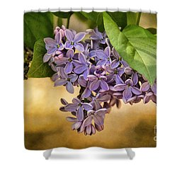 Spring Dreaming Shower Curtain by Peggy Hughes