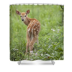 Spring Fawn Shower Curtain by Jeannette Hunt