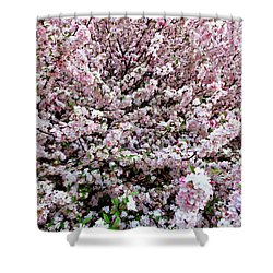 Spring Flowering Tree Shower Curtain by Lanjee Chee